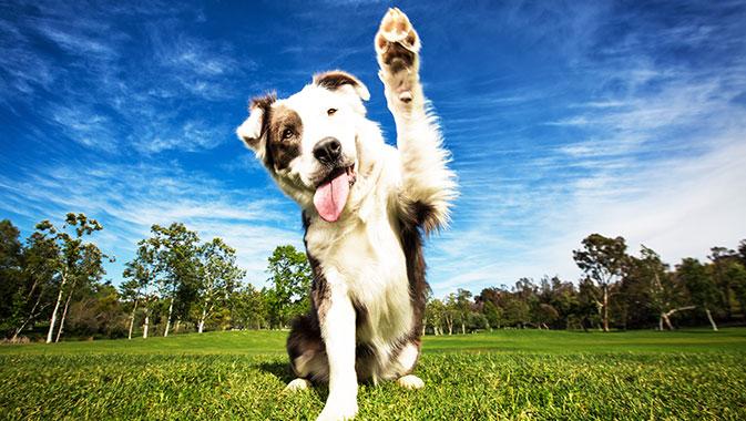 Healthy Treats, Happy Pets