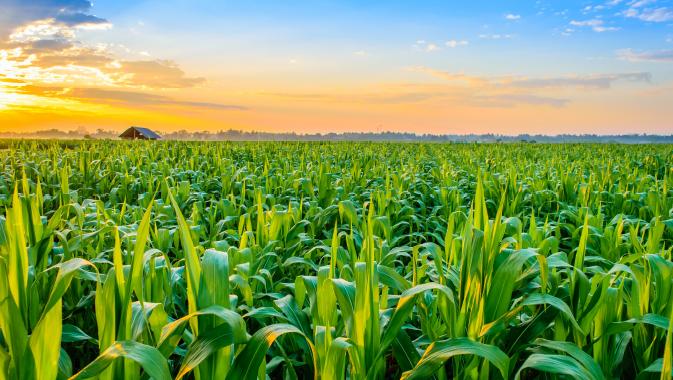 Agriculture Reimagined