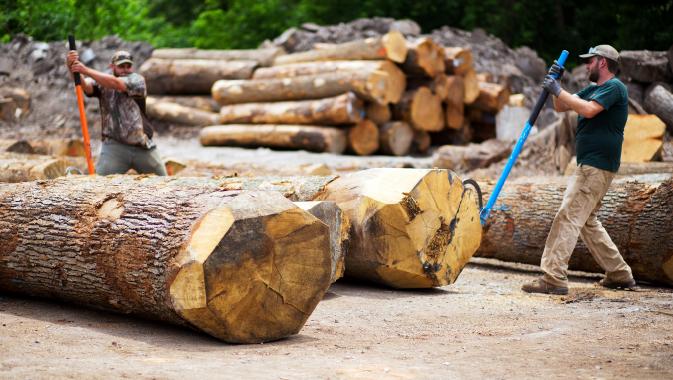 A Vertical Integration Hardwood Business